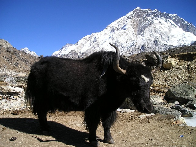 Haut Mustang Népal